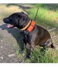 Obojek pro dalšího psa DOG GPS X20